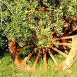 Ruota nel giardino dell'Agriturismo Diciocco in Toscana tra la campagna e il mare