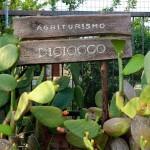 Benvenuti all'Agriturismo Diciocco in Toscana tra la campagna e il mare