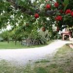 Giardino dell'Agriturismo Diciocco in Toscana tra la campagna e il mare