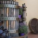Botte fuori dall'Agriturismo Diciocco in Toscana tra la campagna e il mare