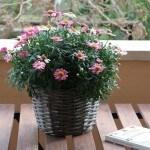 Cestino di fiori Agriturismo Diciocco in Toscana tra la campagna e il mare