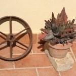 Ruota di carro all'Agriturismo Diciocco in Toscana tra la campagna e il mare